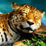 Két hét a Leoparddal