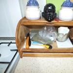 Harminc deka herbált rejtegetett a kenyértartóban