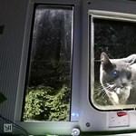 A mesterséges intelligencia arra is jó, hogy a macskák ne hordják haza az elejtett állatokat