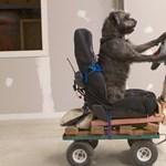 A királyi kismama és az autóvezető kutya: a hét képei - Nagyítás-fotógaléria
