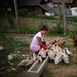 Csökkent Szabolcs-Szatmár-Beregben a munkanélküliség
