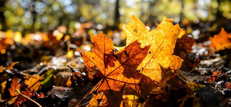 Marad az őszi tavasz: november első napjaiban is 20 fok lesz