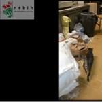 Cica járkált a Pesten bezárt mocskos pékségben – videó