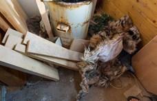 Nyúzták, főzték a nagymacskákat, brutális vágóhídra bukkantak Prágában – fotók