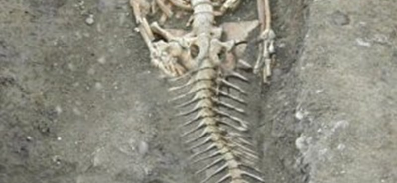 Sellő csontváza került elő egy bulgáriai ásatáson?