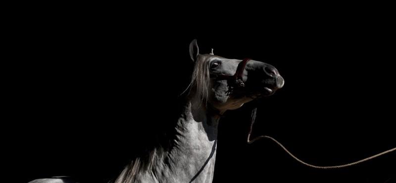 Mit keres egy ló egy éjszakai klubban?