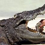 Rengeteg pénzt kell fizetnie a férfinak, aki lelőtt egy százéves krokodilt