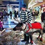 Hús-vér rénszarvas volt a sztár a Corvin Bevásárlóközpontban (videó)