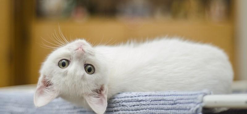 Macskáik mentettek meg egy házaspárt a biztos haláltól Olaszországban