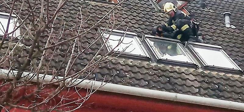 Tacskót mentettek a győri tűzoltók