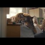A WWF karácsonyi tigrises hirdetése mindent visz - videó