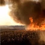 Öt hektáron lángolt az aljnövényzet Kiskőrösön