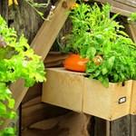 Függőleges kert gyorsan és olcsón
