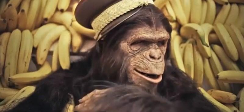 Visszatérhetnek a csimpánzok a fővárosi állatkertbe