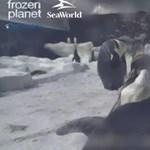 Videó: nézze, mit csinálnak a pingvinek épp ebben a pillanatban!