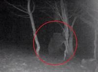 Medvét vettek videóra az Aggteleki Nemzeti Parkban