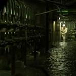 Úgy özönlenek a turisták Csernobilba, mintha kötelező lenne