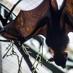 Betiltaná a vadállatpiacokat az ENSZ szakértője