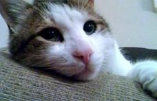 Allergiás a macskákra? Itt az ellenszer!