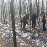 Napok óta nem volt tüzelője, elment fát lopni a 46 éves asszony – már gyanúsított