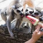 Már a programok is megvannak az idei Állatkertek Éjszakájára