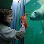 A 145 cm alattiak ingyen mehetnek be az állatkertbe