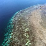 Durva korallfehéredés miatt aggódnak az ausztrál tudósok