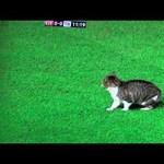 Videó: macska zavarta meg a Liverpool meccsét