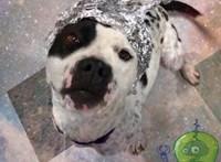 Az 51-es körzet idegenjei segítettek ezeknek a kutyáknak otthont találni