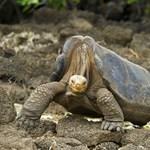 Téved, ha azt hiszi, csak a magyarok közt akad olyan, aki bántja a teknősöket
