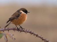Nehogy hazavigye a földön talált madárfiókát, óriási bajt csinálhat vele