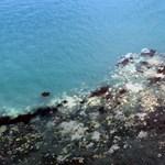 """Oda kellene figyelnünk rájuk: 9-12 évükbe telik a koralloknak, mire felépülnek egy """"betegségből"""""""