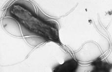 Új modellt állított fel a rezisztens baktériumok terjedésére Röst Gergely