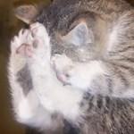 Állatkínzás miatt jelentettek fel egy lányt, aki kiscicák megöléséről posztolt
