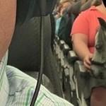 Egy amerikai nő egyszer csak felszállt a repülőgépre egy lóval