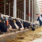 Megalapozná agrárvállalkozása további sikereit? Mutatjuk, milyen lehetőségei vannak