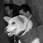 Kutyák, akik elsőként jöttek vissza élve az űrből: 60 éve szállt föl Belka és Sztrelka