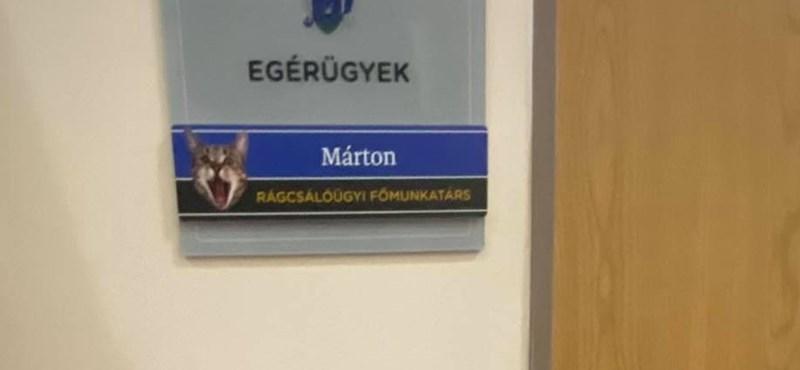 Diósjenőn még rágcsálóügyi főmunkatárs is dolgozik: a Márton nevű mentett macska