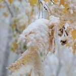 Többfelé már havazik, reggelre az egész országot hó boríthatja