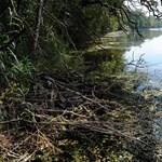 Illegális terepjáróversennyel zúztak szét több Natura 2000-es területet