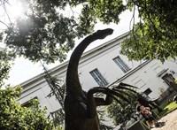 Eszeveszett tempóban leltároznak a Természettudományi Múzeumban