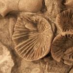 Giliszták után kutatott a 6 éves fiú, több százmillió éves kövületre bukkant a kertben
