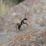 Egyre többen tartanak háziállatként hangyát – és ebből elég nagy baj lehet