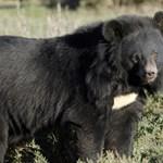 Tévedésből hazavitt a családnak egy medvét