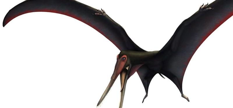 Lényegében egy repülő őssárkányt találtak Erdélyben