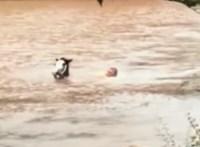 Kimentette lovát az árvízből a hős walesi – videó