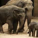 Elefántok génjei lehetnek a kulcsok a rák elleni harcban