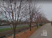 Kivágnak egy harmincéves fasort Csopakon, mert útban van a vasút villamosításánál