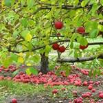 10 tipp, hogy gyümölcsfái jól vészeljék át a telet!