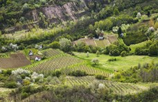 Kedvezményesen adták oda a Tokaj nevet az állami milliárdokkal kitömött szállodásnak